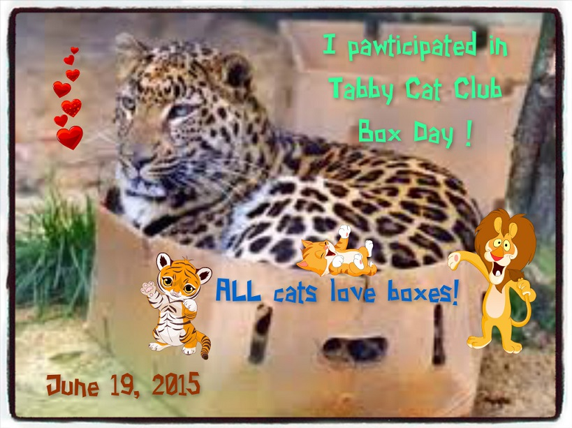 TCC Box Day 2015